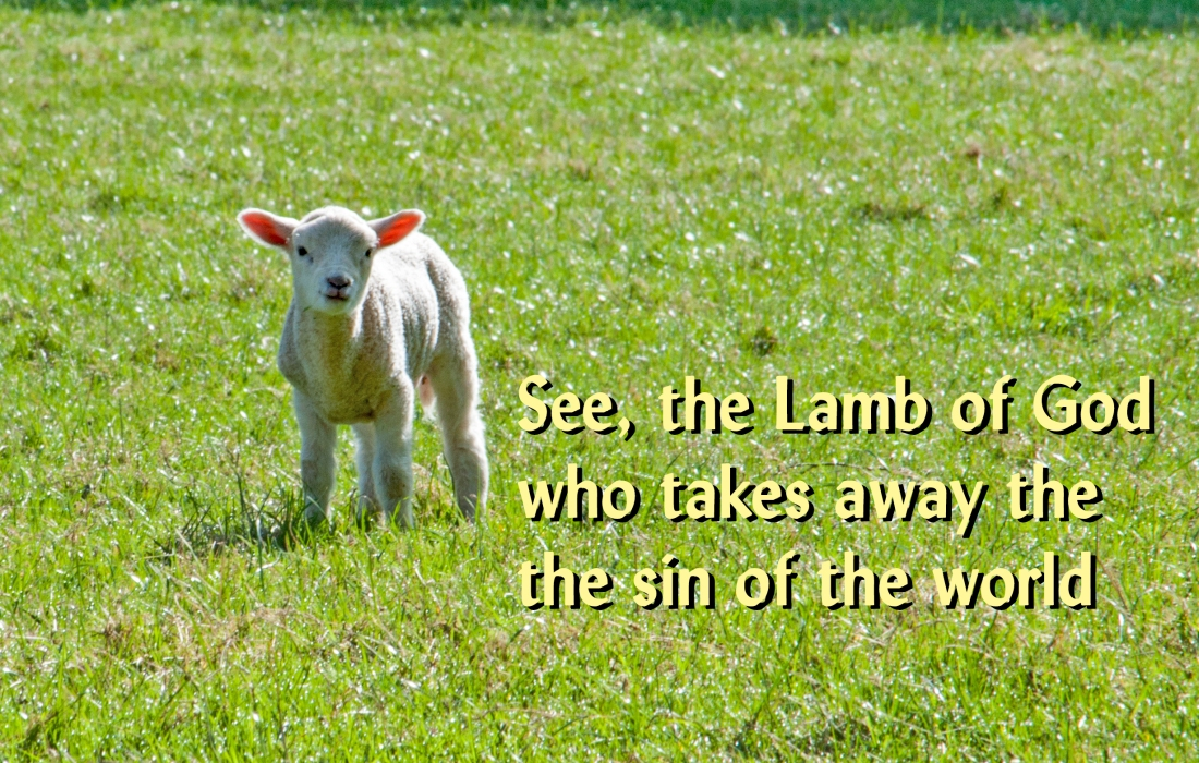Lamb of God_Ashridge Sheep