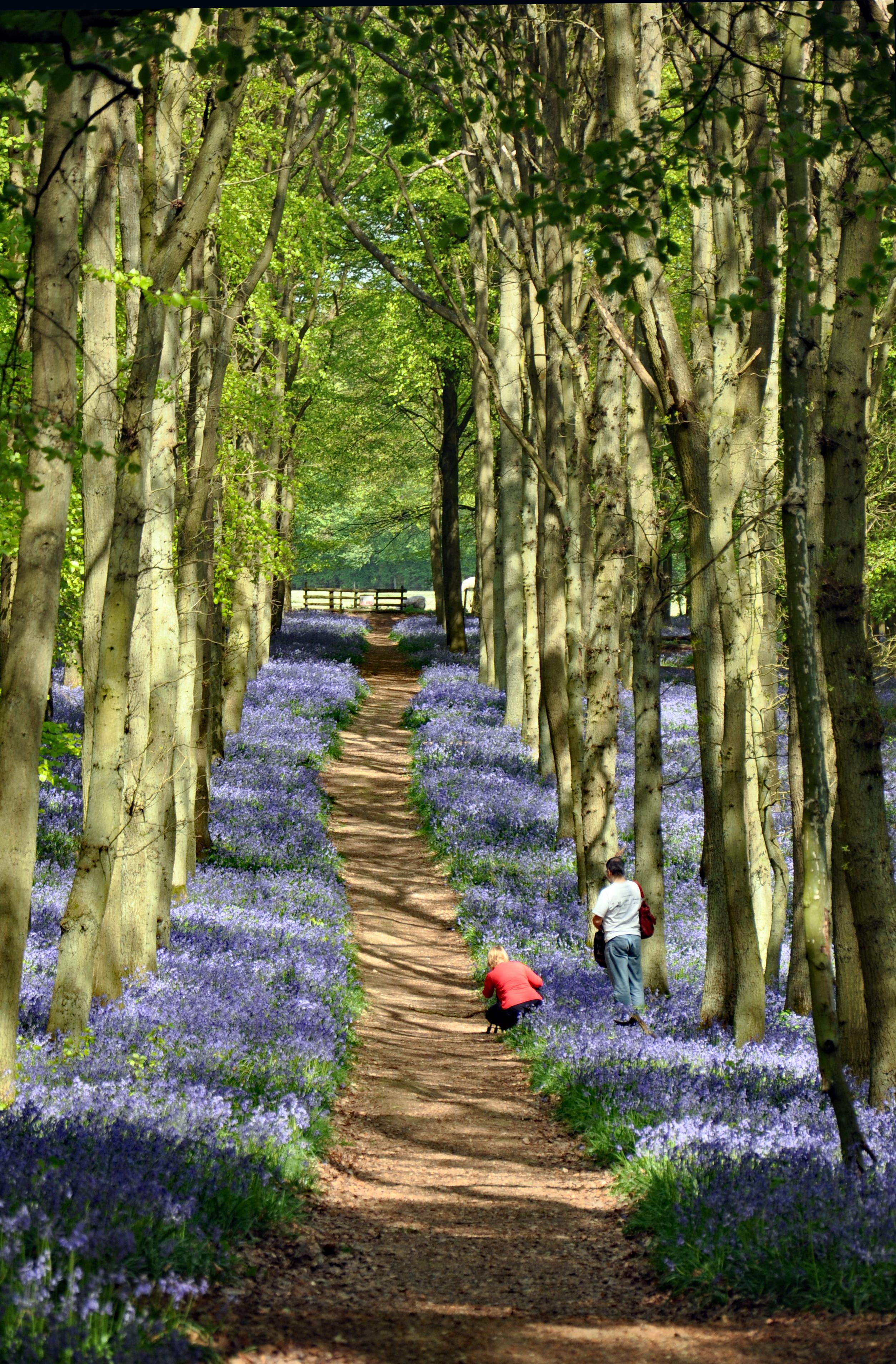 Trusted Pathway 0001Ashridge220411Q