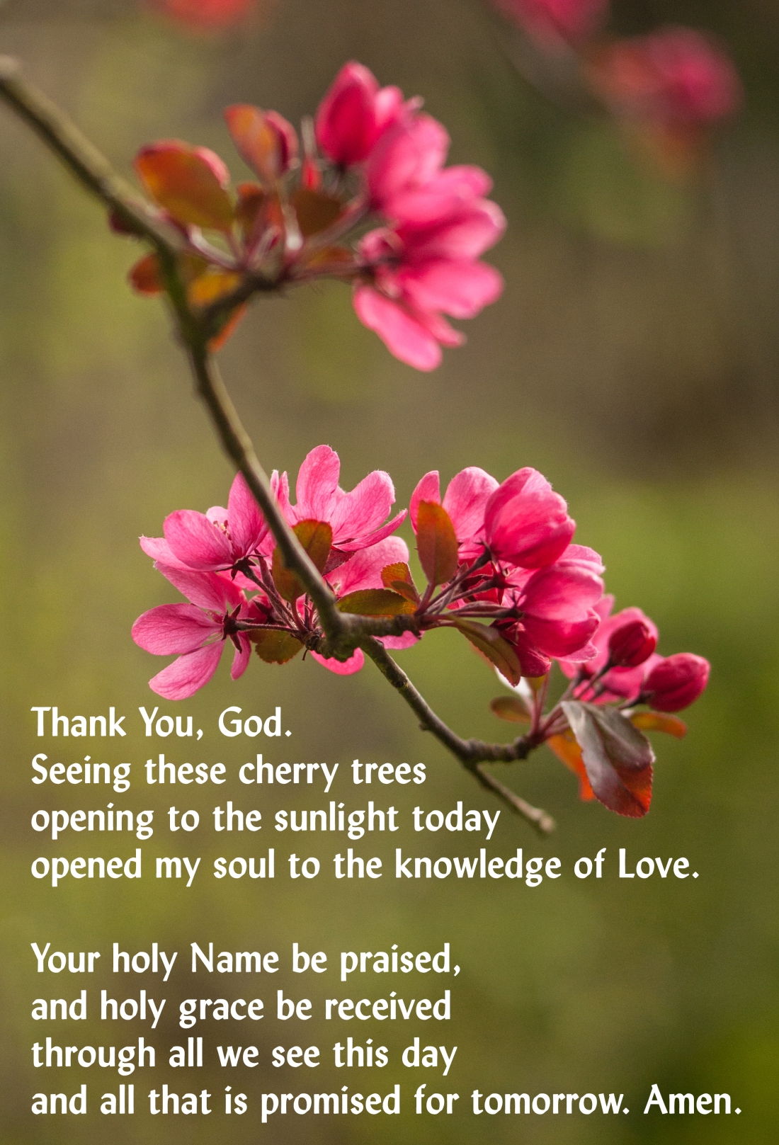 Prayer Cherry Bright 011Home 250418