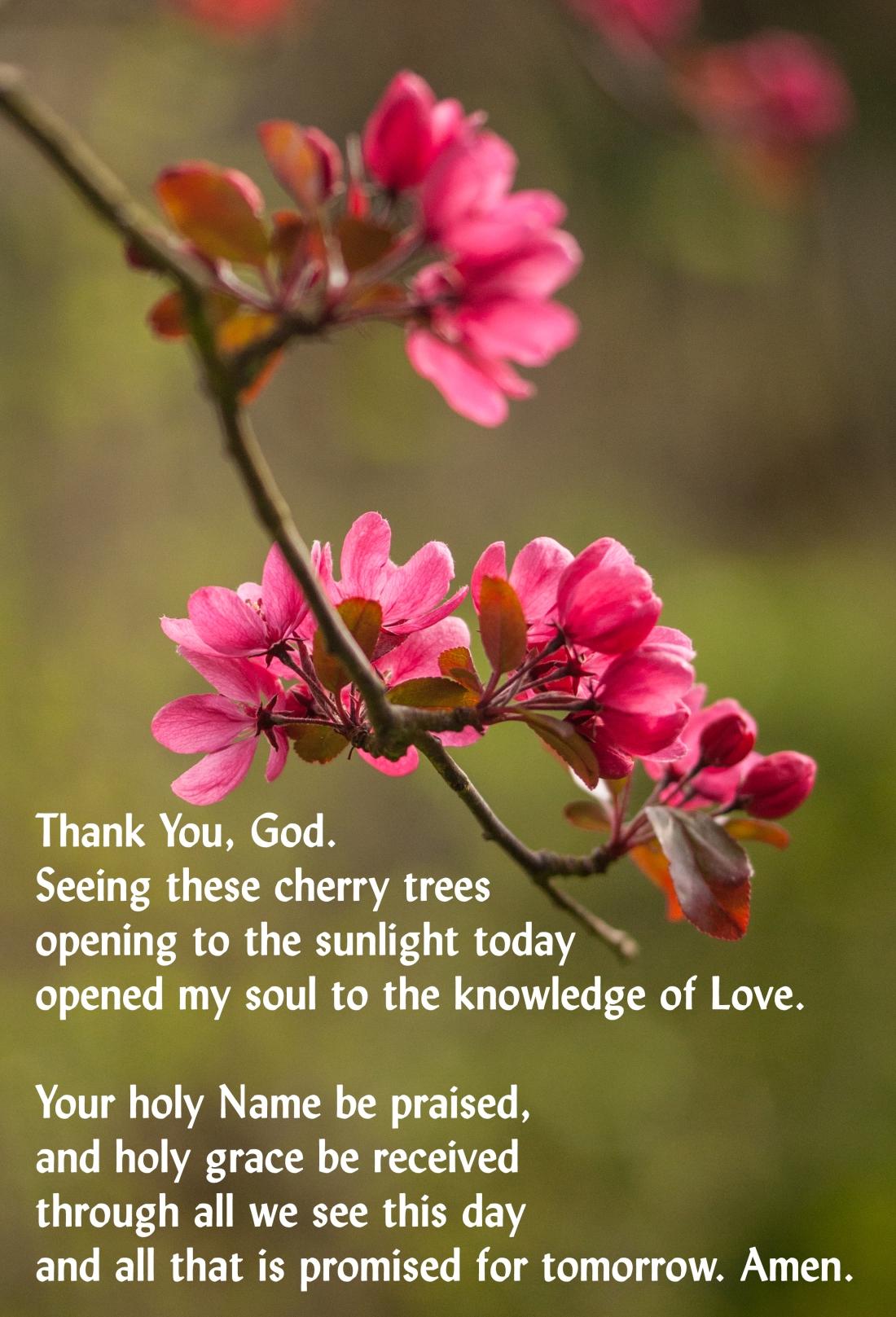 Prayer Cherry Bright 011Home 250418