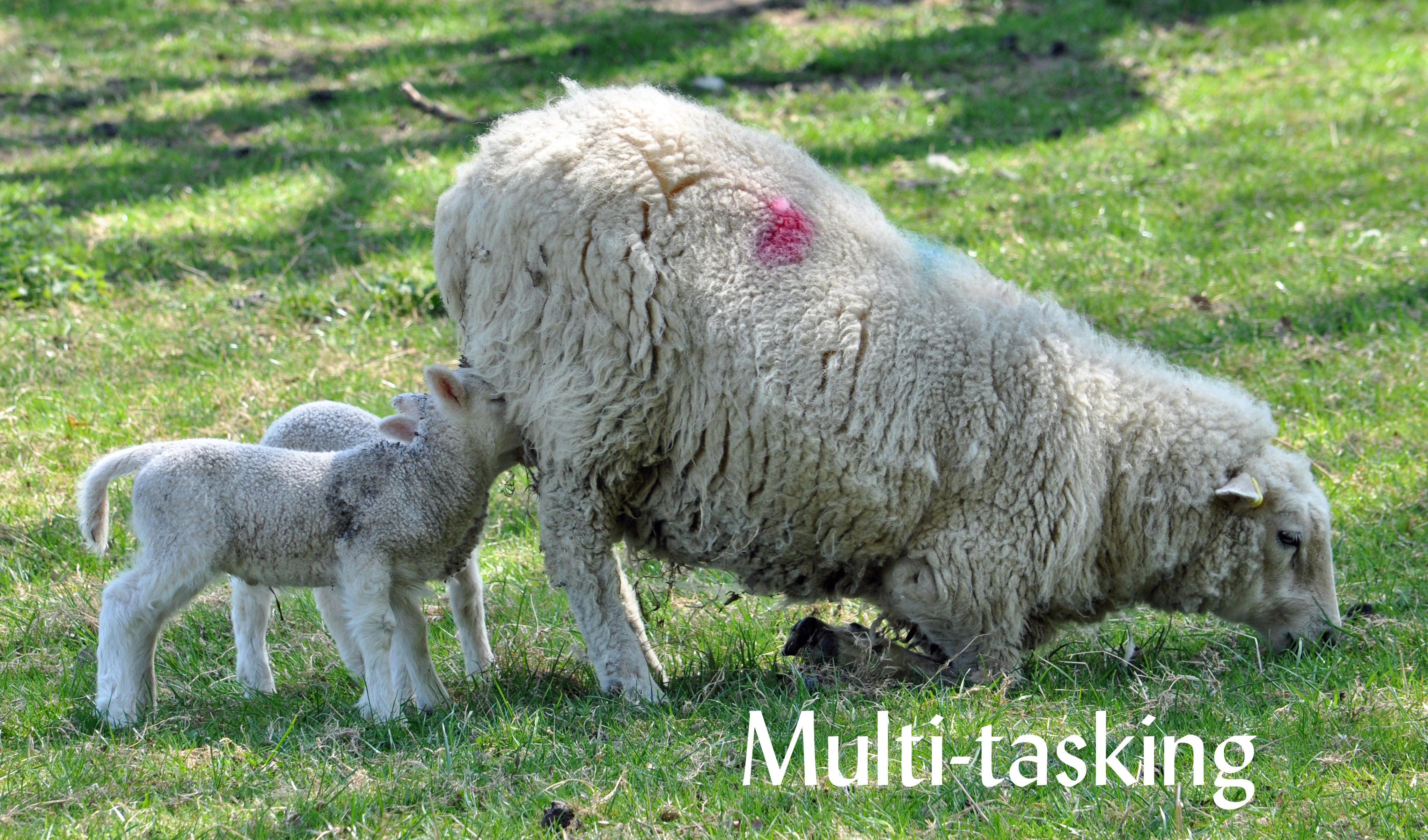 Multitasking 060early May013 Ashcrop