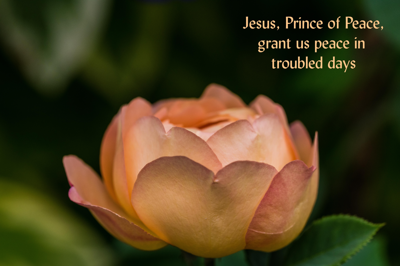 Prince of Peace 001garden 0718