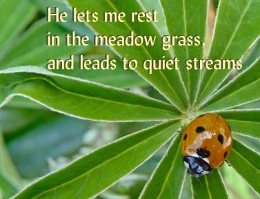 Psalm 23v2 ladybird 201_hatfieldhouse15crop18