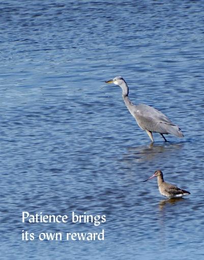 patient heron crop 014bike ride
