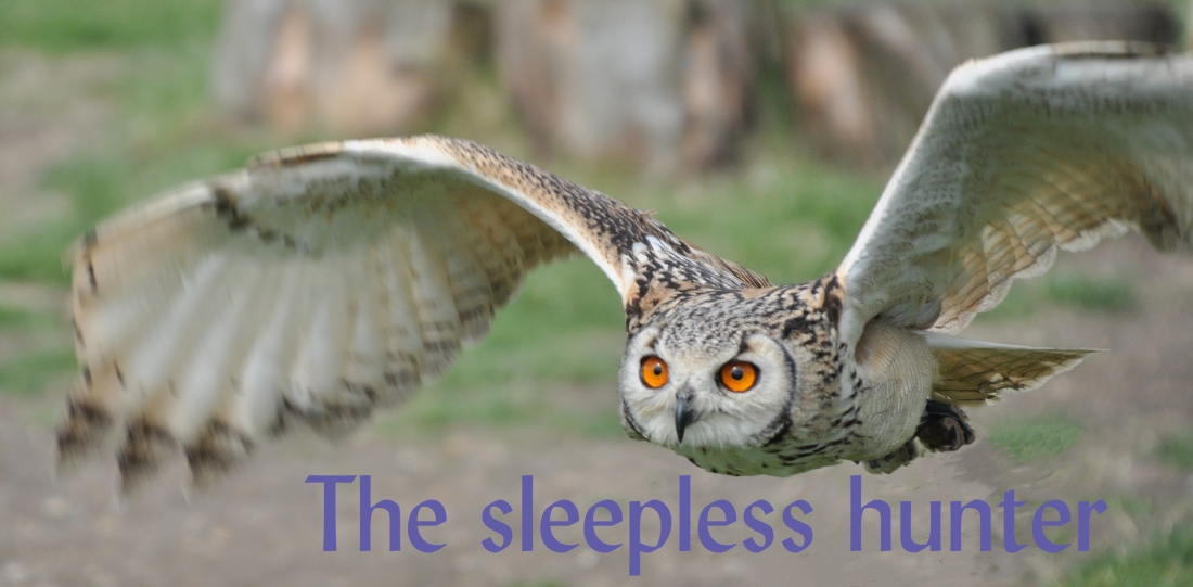 sleepless hunter 422Birdsprey2July16