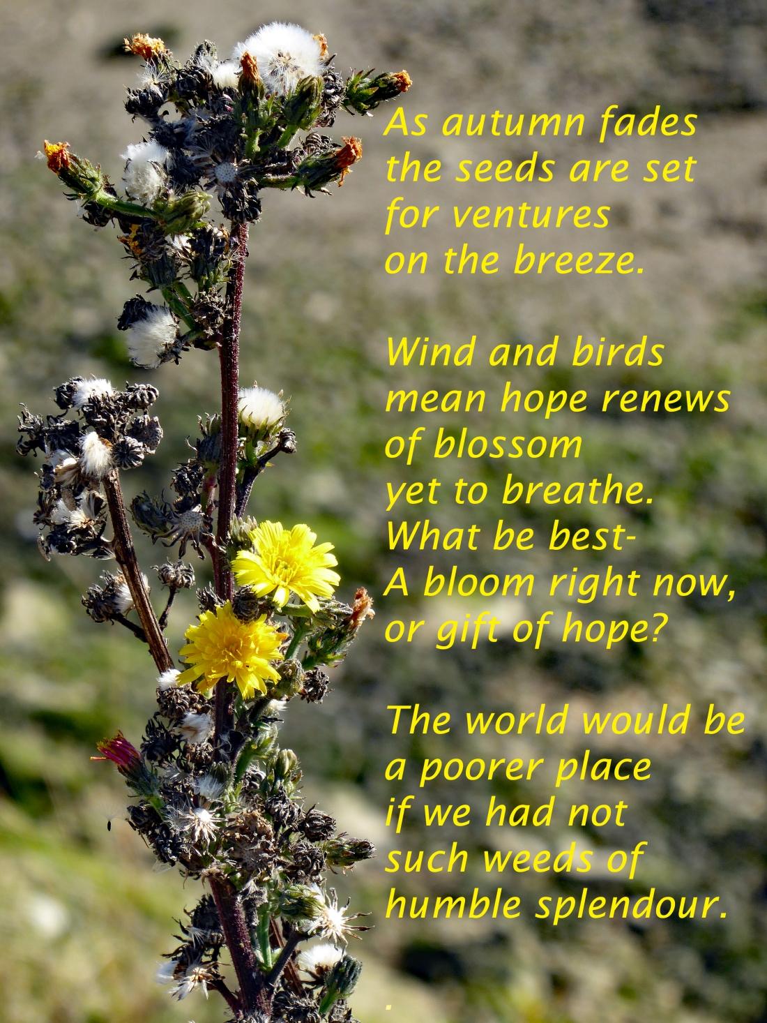 weeds of humble splendour