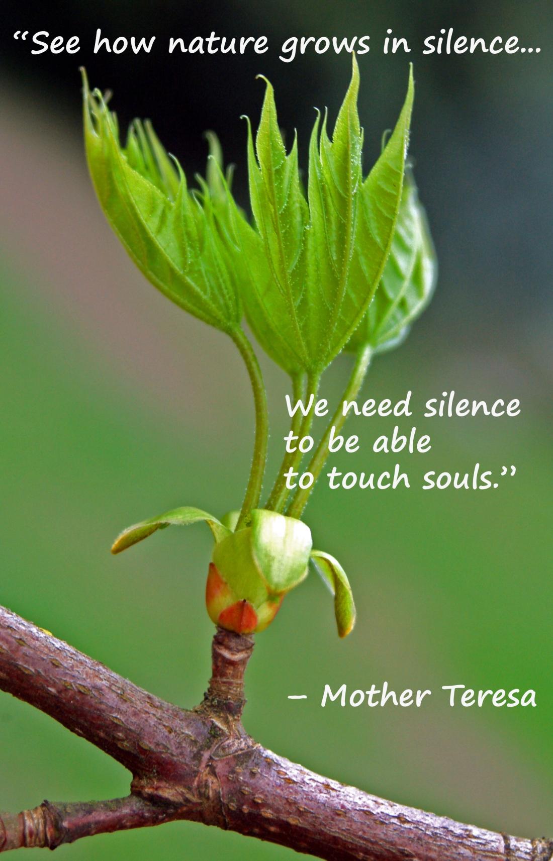 Teresa silence leaves