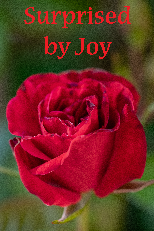 Joy surprise Rose edit 006gdn 110519
