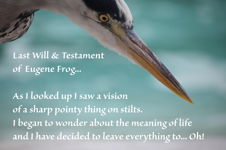 Heron bait view 030_zsl230715regent