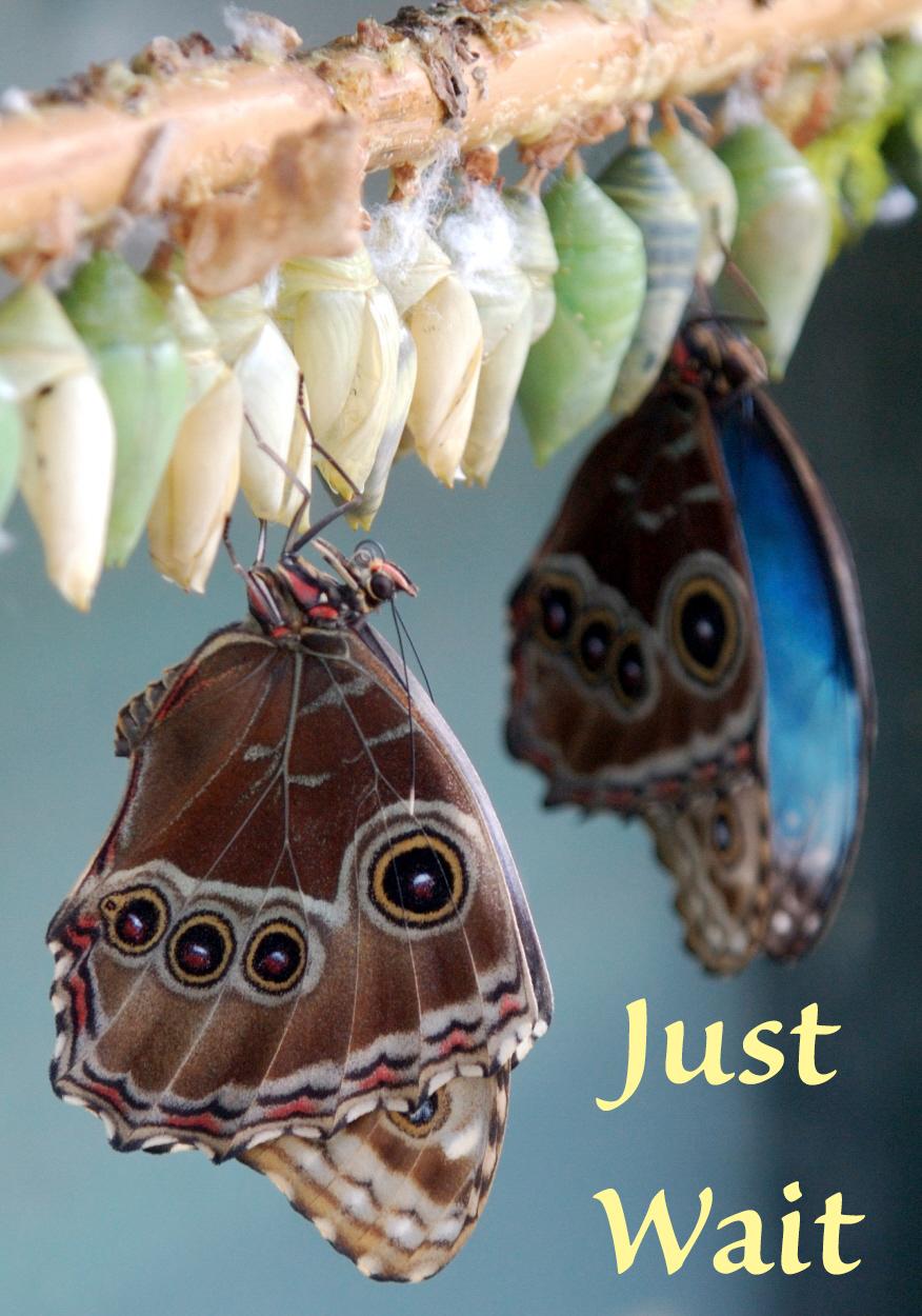 just wait butterfly